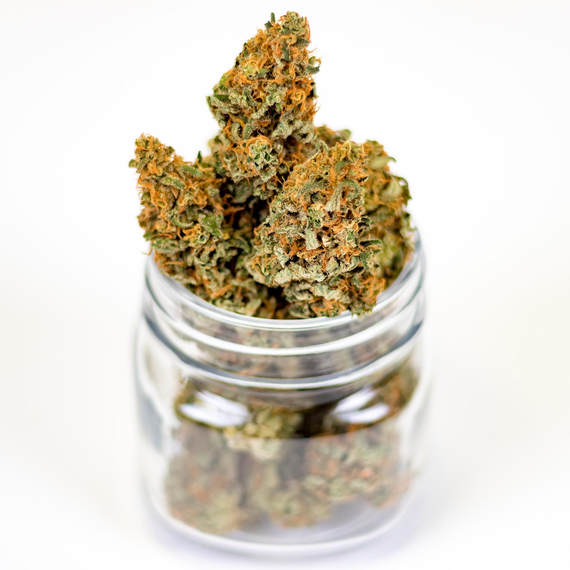 Quand le cannabis se livre à domicile – CelsaLab